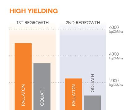 Raphno high yielding
